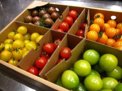 五色トマト